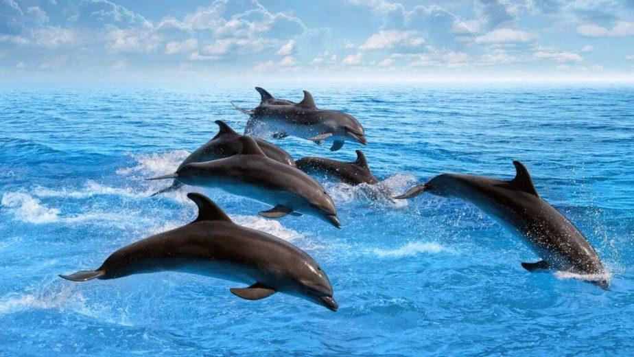 Curiosidades de los delfines
