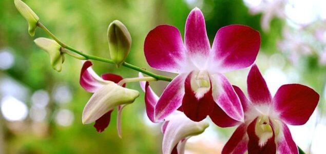 Curiosidades de las orquídeas