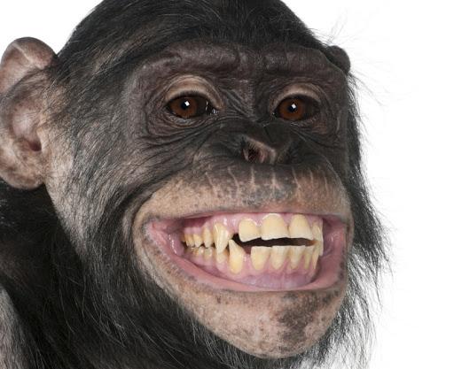 Curiosidades de los monos